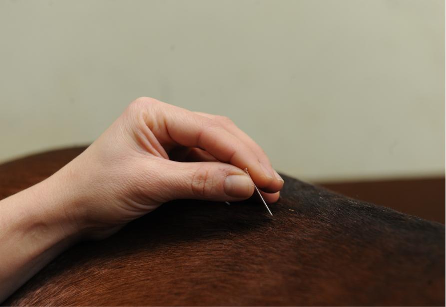 Acupuncture Vétérinaire